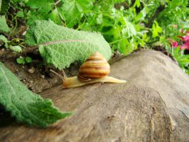 Snail on the loose by yvasss