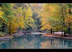 autumnal contemplation... by Iulian-dA-gallery