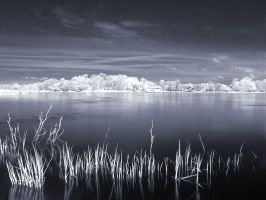 Infrared Landscape Part IV by knechtrootrecht