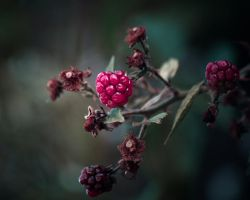 ..: Automne :.. by Mademoiselle-P