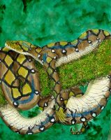 Reticulated Python Naga by starglo21