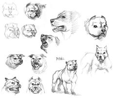 Some dog sketches by Popgrafix