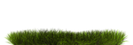Grass by yonis