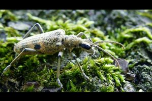 Forest Bug by Keiton