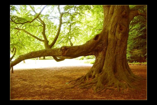Reaching by Forestina-Fotos