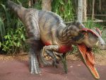 AUZOO Allosaurus by becuffin