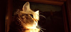 my cat by vadimfrolov