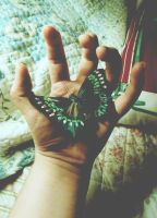 The Hand and the Butterfly by JodiMay
