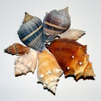 Shells 1 by yeliriley