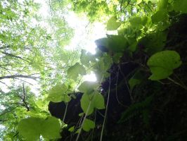 Looking Up by irrationalrationale