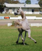 TW arab white grey twisted viewd from behind by Chunga-Stock