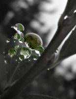 Rain Drops of Color 3 by TheUniphotoghrpher