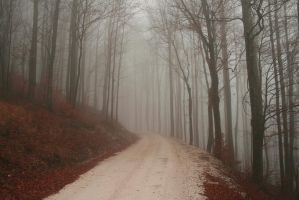 Foggy Forest by Banana-Workshop