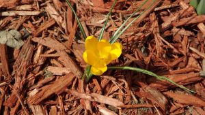 First Spring Flower by Speck2