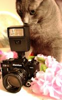 Camera Cat by MeowPic