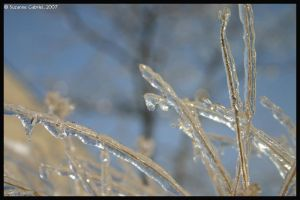 Ice Grass 2 by Nariane