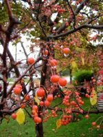 Crabapples 2 by NetherStray