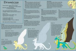 Drassicus Reference Sheet by pretiossissime