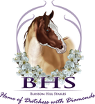 BlossomHilllStables Logo Contest Entry 1 by Rising-High-Ranch