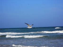 STOCK Seagull - 1 by EscapeFromWonderland