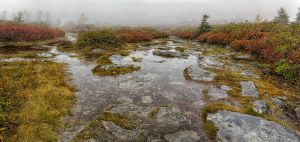 Dolly Sods Wilderness by AugenStudios