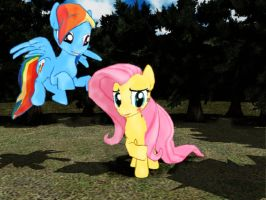 MMD MLP - Fluttershy and RainbowDash (Request) by MMDCharizard