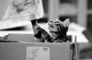 cat in a box by ncavee