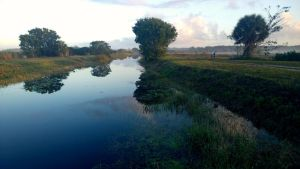 Everglades Feb 1 14 Pic 3 by shawamy2