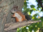 Give me a nut by starykocur