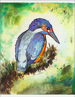 Kingfisher: Focal point+Emphasis by SunStateGalleries