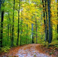 Forest path.img610 by harrietsfriend
