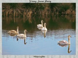 young swan party by mariaper