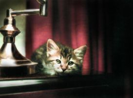 Classical Kitten by Pleiadies