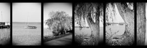 about boats, trees and ducks by stan2400
