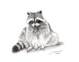 Racoon by Justysiak
