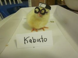 Kabuto As a Baby Chick Cosplay by Chelseam2