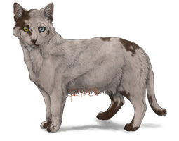 Piebald Cat by Riixon