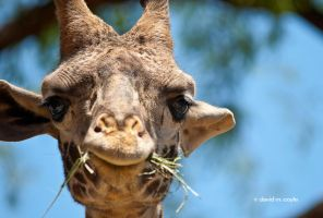 Straw Eating Grin by DavidMCoyle