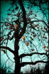halloween tree by manzin