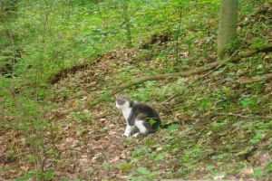 Tiny cat on a big hill by Crayon-Shadowe