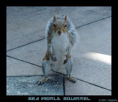 SeaWorld Squirrel by glowing