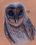 Black Barn Owl by KristynJanelle