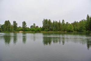 Musings On A Pond by Avenuewriter