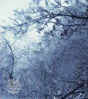 Ice Trees-Ice Storm Photo 2 by Pi-ray