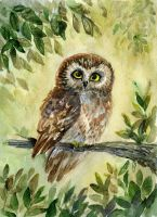 Saw-whet Owl by Redilion