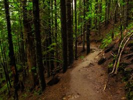 Rattlesnake Forest by KRHPhotography