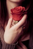 Red Rose by JudyDepp