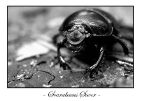 Scarab Beetle by BoatyBen