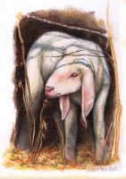little drawings 03 - A Lamb by LauraPex