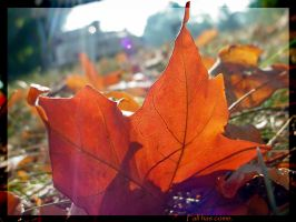 Fall has come by RainyDayRunning